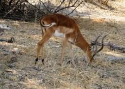 Riserva Naturale di Moremi - Botswana