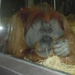 Zoo di Berlino - Germania