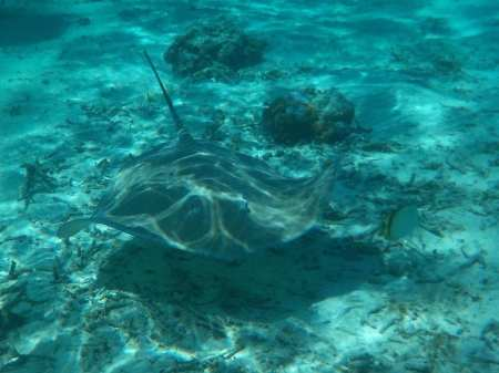 Snorkeling - Huahine, Polinesia Francese
