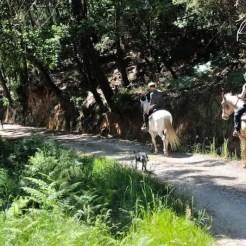 Agriturismo I Pianacci - Uzzano (PT), Italia