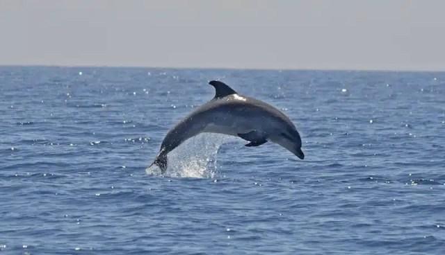 Delfini, Ente Progetto Natura - Sardegna, Italia
