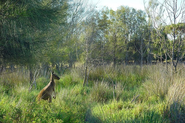Heirisson Island - Perth, Australia