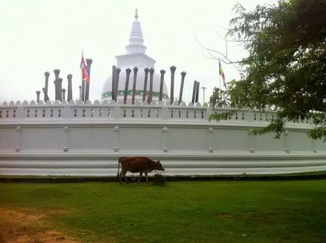 Thuparama - Anuradhapura, Sri Lanka