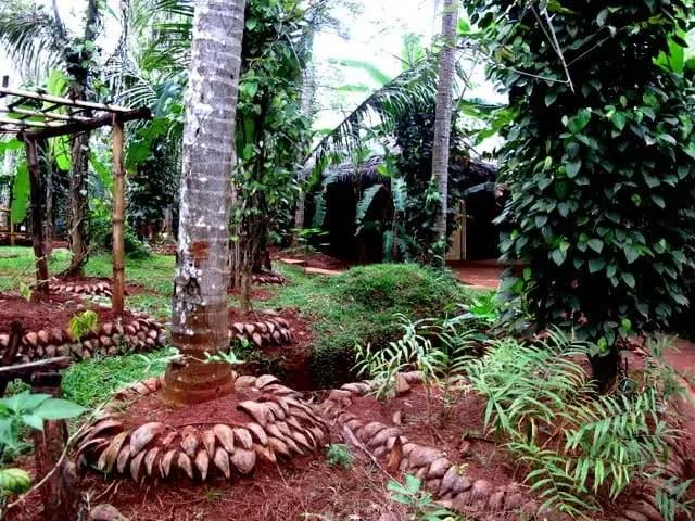 Ayurveda - Kandy, Sri Lanka