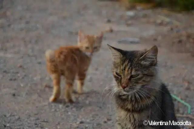 Gatti randagi - Lindo, Rodi, Grecia