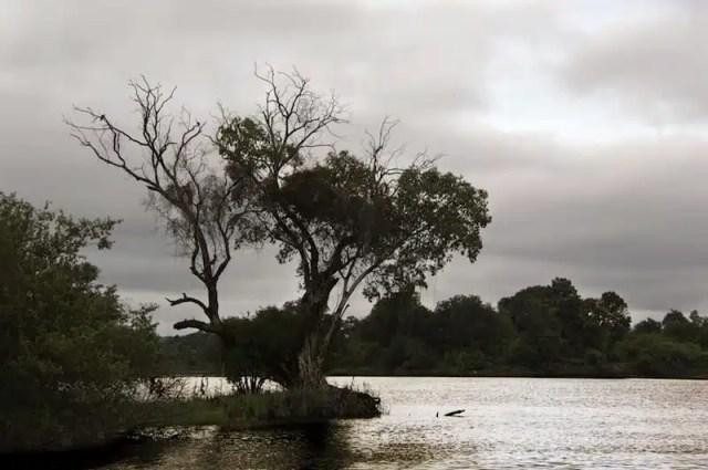 Zambesi - Zimbabwe