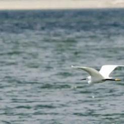 Oasi WWF del Lago di Conza
