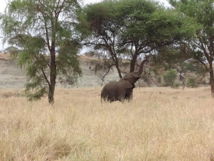 Serengeti, safari