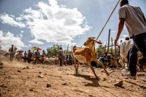 7MML - Etiopia