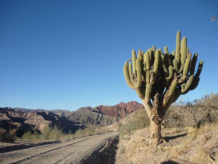 Cactus & Rocce, Tupiza