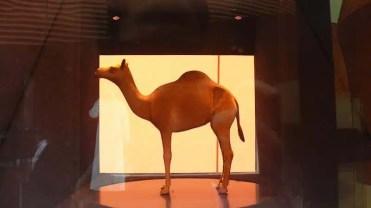 EXPO2015 - Il padiglione degli EAU