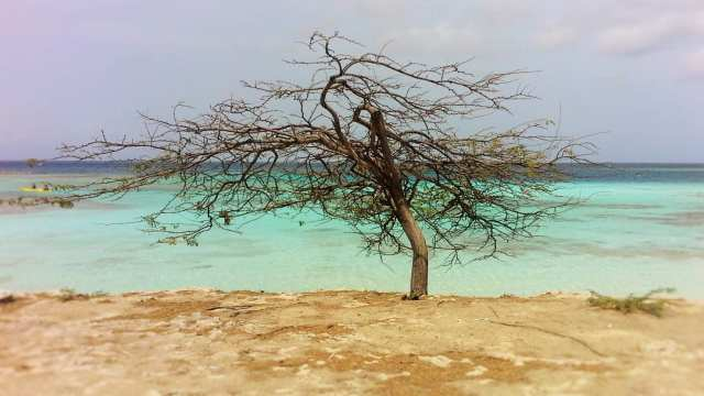 Mangel Halto - Aruba
