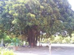 Giardino Inglese Palermo