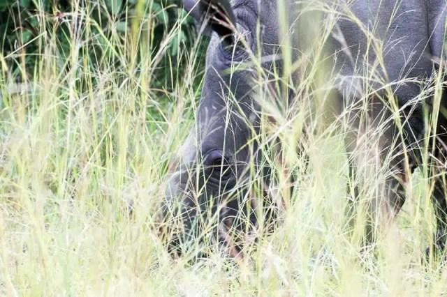 Ziwa Rhino Sanctuary - Uganda