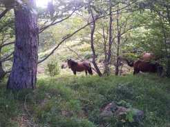Wild Horse Watching - Parco dell'Aveto, Liguria