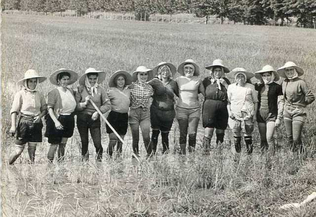 Mondine pontogliesi negli anni Cinquanta – Biella e Vercelli, il riso