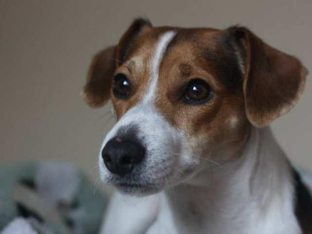 Rufus-primo piano