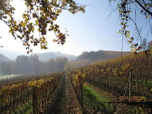 Trekking nelle Langhe - Piemonte