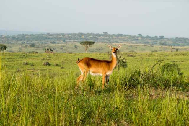 Parco Nazionale delle Cascate Murchison - Uganda