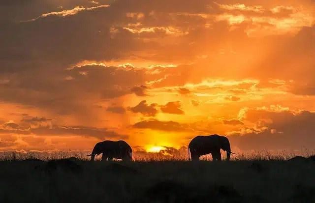 Masai Mara - Tanzania