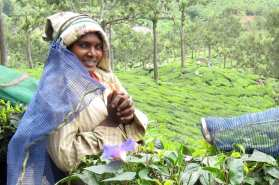 3 Munnar piantagioni di tè (9)
