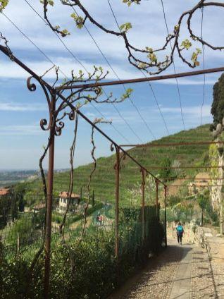 Brianza-Montevecchia