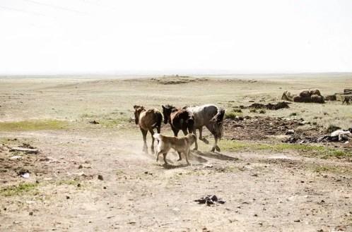 7MML Ritorno al centro - Kazakistan