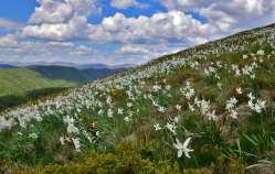 Valle dei Narcisi (3)