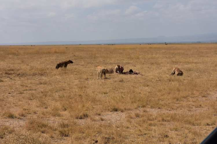 l'Amboseli National Park