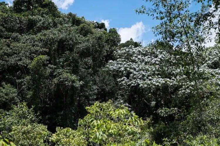 reserve natural de tun quimbaya