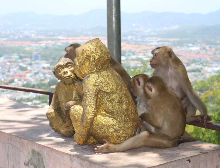 Monkey Hill in Thailand