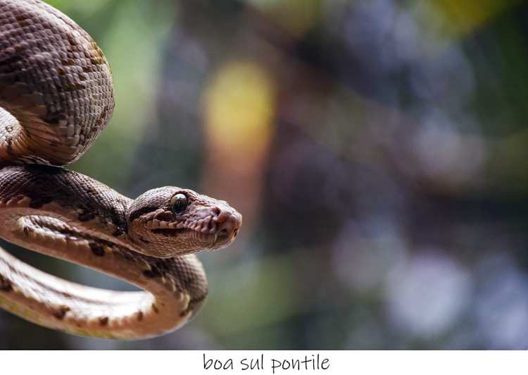 serpente al Sachavaca Camp, Parque del Manu, Perù