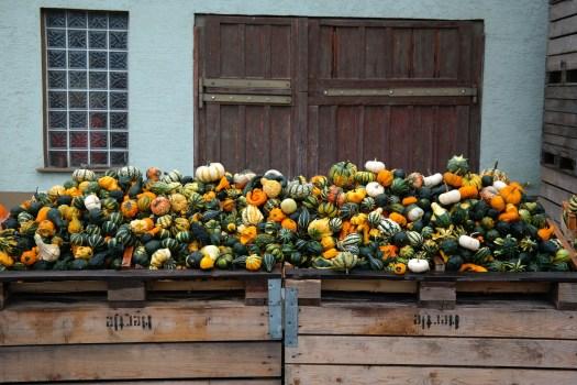 pumpkins-228499_1920