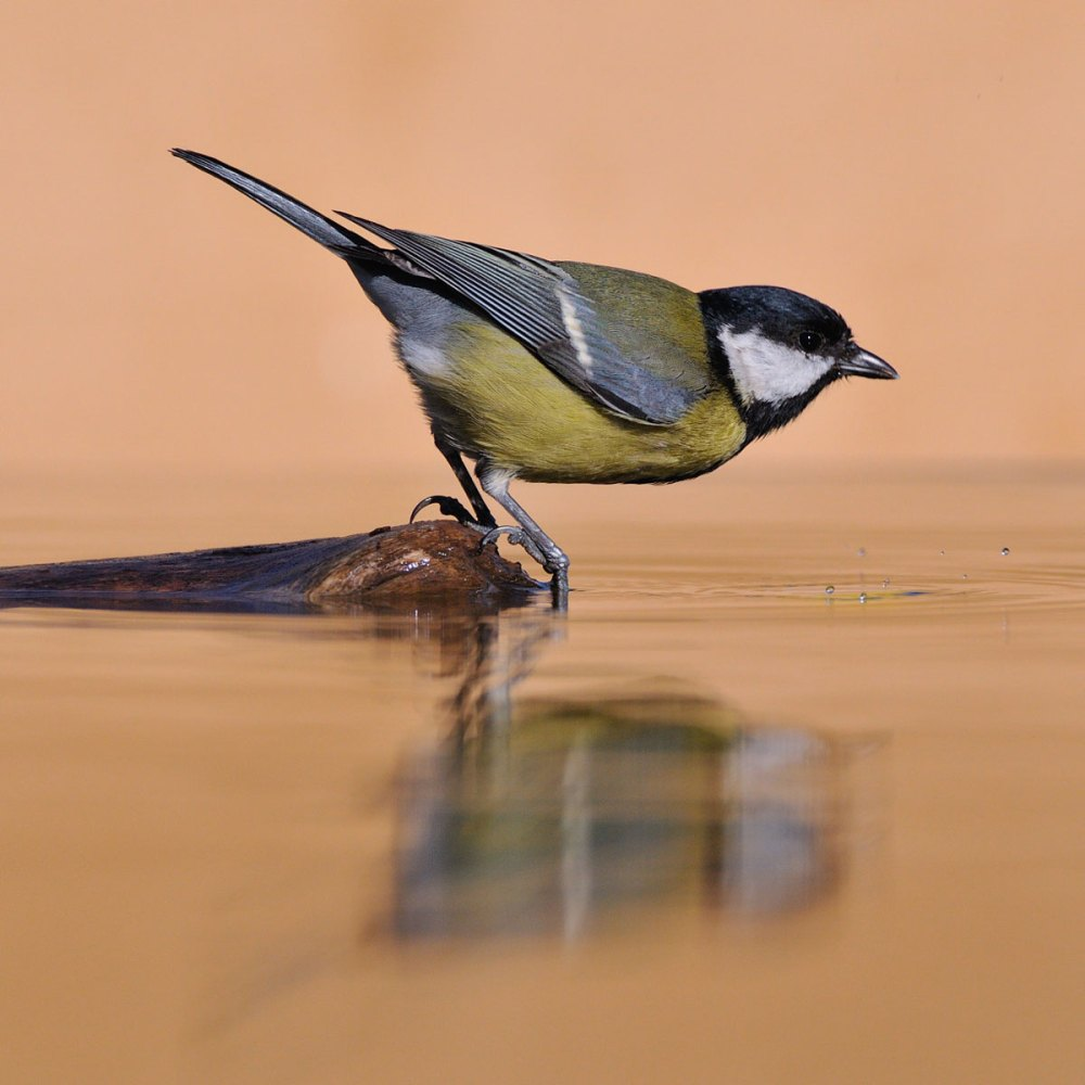 11Jan21Greattit