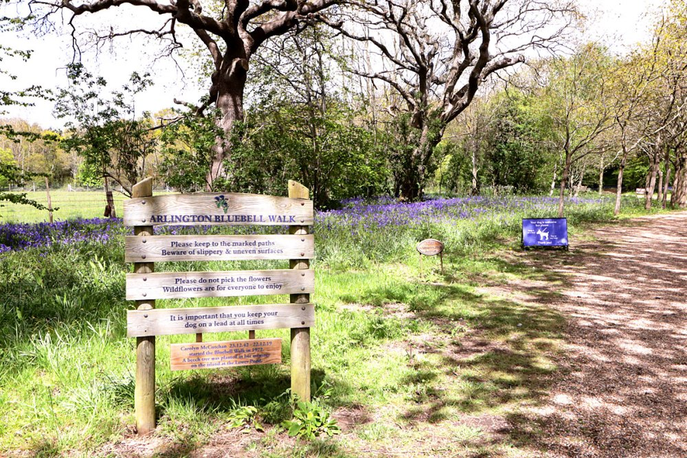 12May21Bluebell1