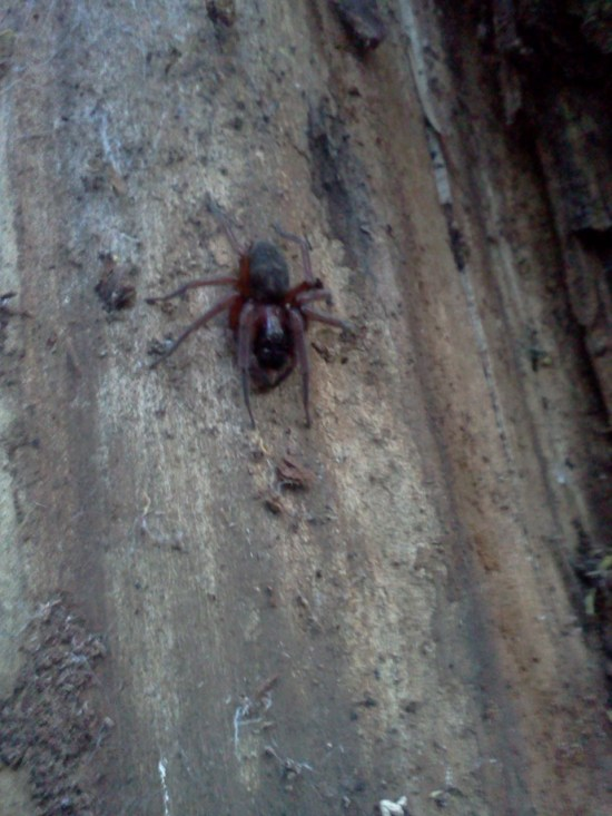 Mean ass spider