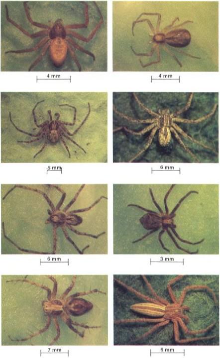 PNW Spiders