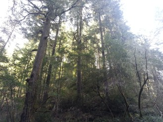 More old growth.