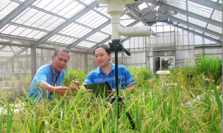 Heat-tolerant rice research wins outstanding paper award