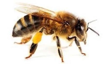 BAR Itinaguyod ang Lipa Beekeepers Marketing Cooperative (LBMC)