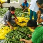 NDA offers Livelihood Trainings for Iloilo Farmers