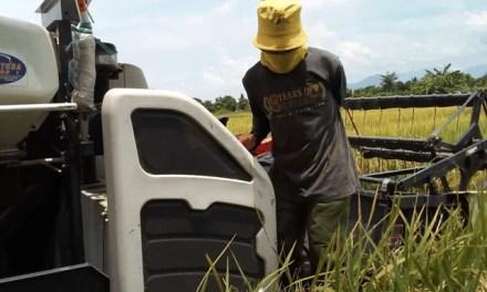 Brand-new Rice Combine Harvester