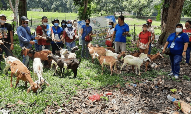 Goat Deliveries for Better Income
