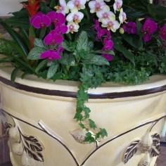 Potted plants around resort