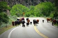 Colorado rush hour