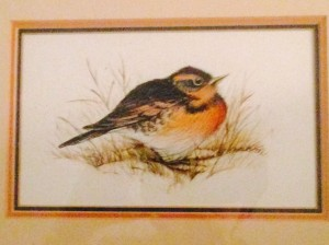Cathy's Robin