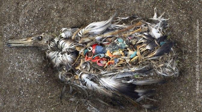 Peatame plastiuputuse! Üleeuroopaline aktsioon!