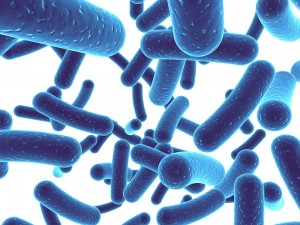 Image result for lactobacillus acidophilus