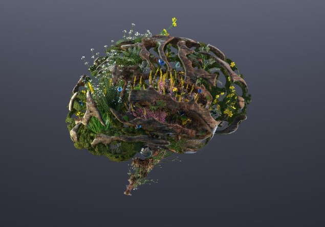 Healthy and Fortified Brain