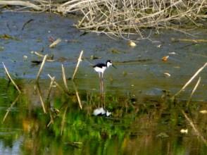 Water bird - Ometepe